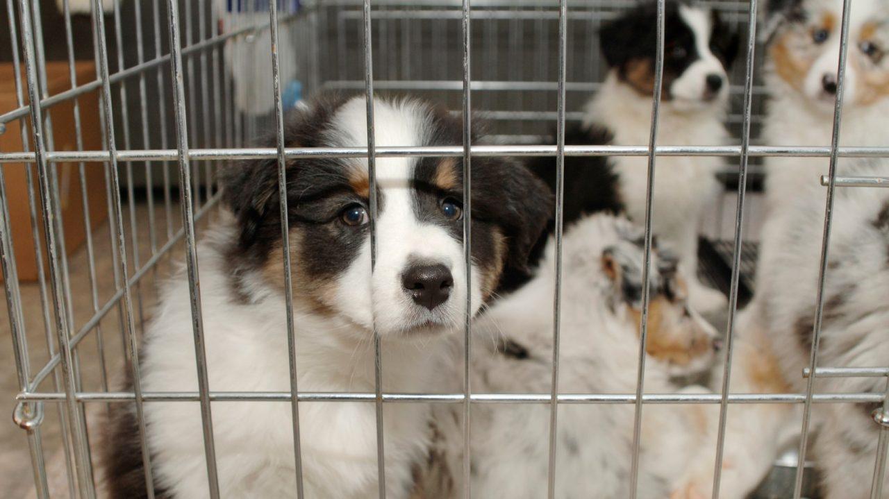 Υιοθετώντας ένα σκυλάκι από το καταφύγιο