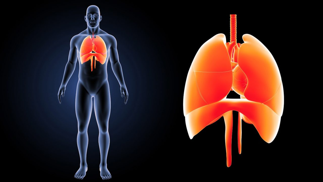 Πνεύμονας: Τεστ προβλέπει τον κίνδυνο απόρριψης του μοσχεύματος