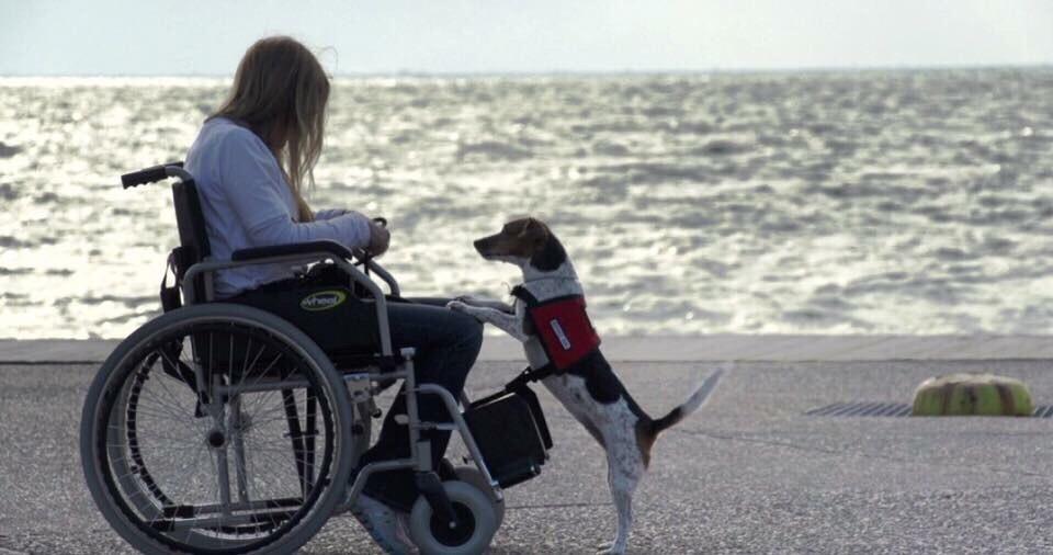 Σκύλοι: Αλλάζουν τις ζωές των ατόμων με ειδικές ανάγκες