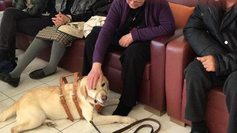 Σκύλοι στην υπηρεσία ατόμων με άνοια ή νόσο Αλτσχάιμερ