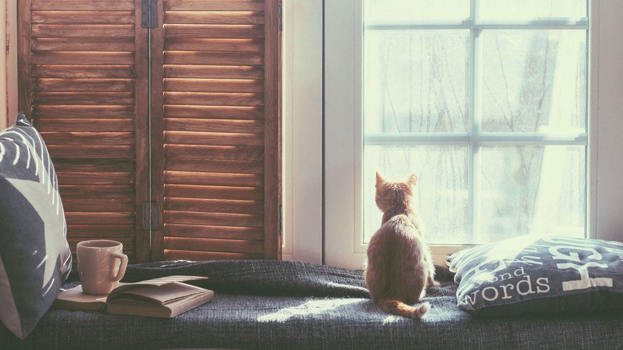 Γάτα: Πώς θα καταλάβουμε ότι είναι άρρωστη