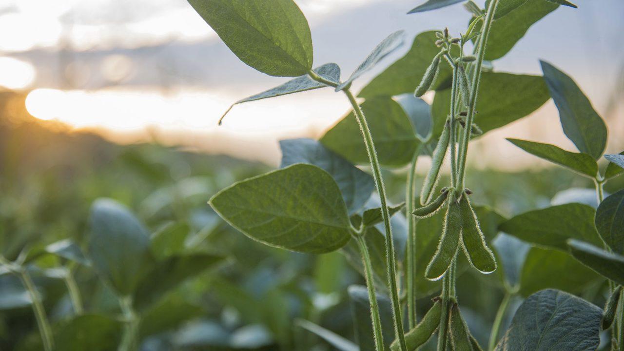 Αυτό το φυτό μπορεί να μας σώσει από τη νόσο Αλτσχάιμερ