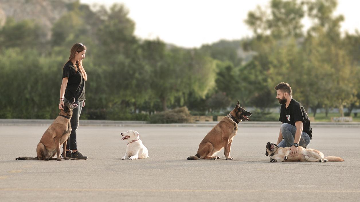 Επτά μύθοι (και οι αλήθειες) για τη βόλτα του σκύλου 8