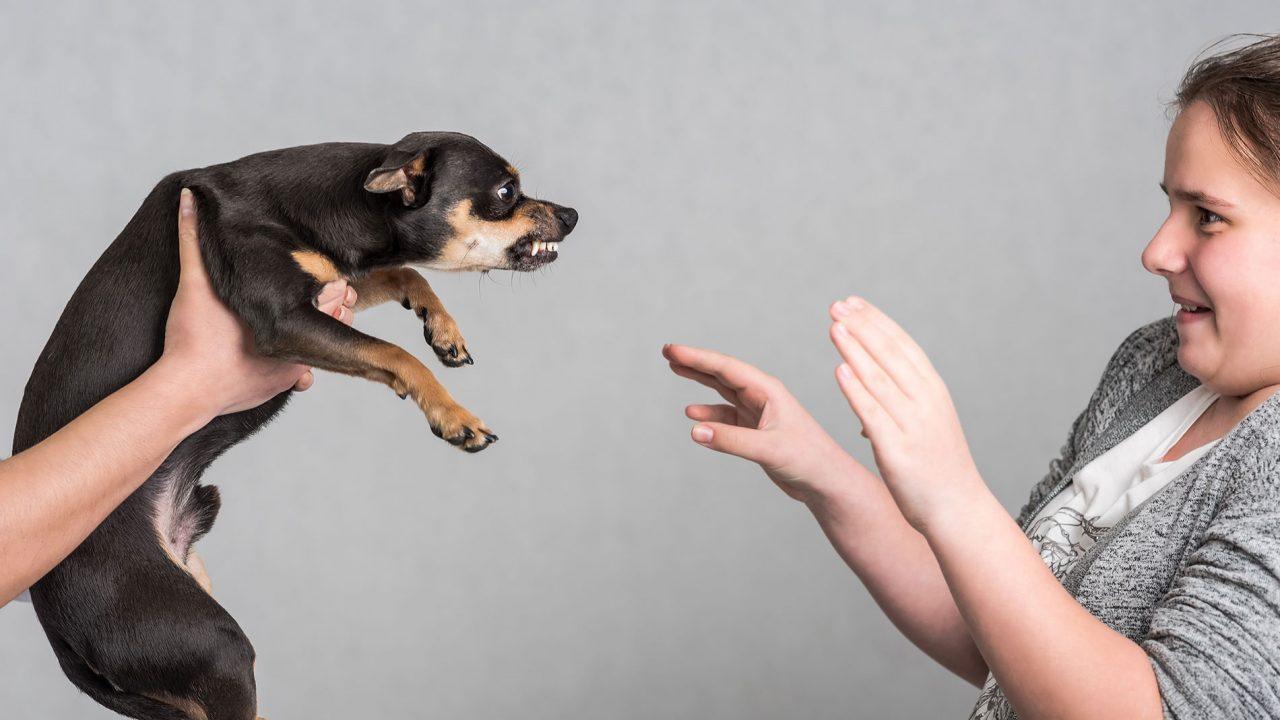 Αναγνωρίστε τα σημάδια δυσφορίας του σκύλου