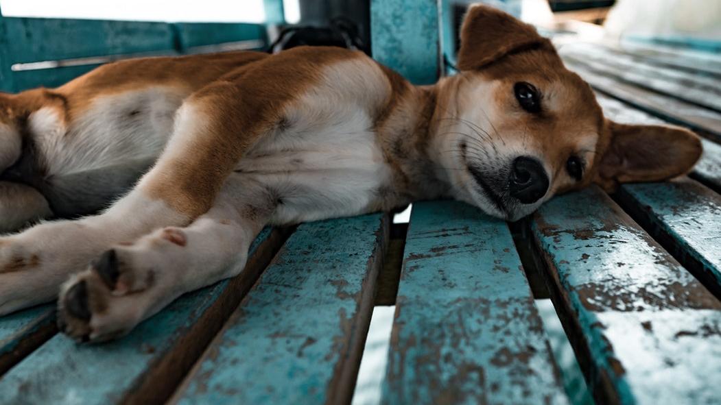 Παγκόσμια Ημέρα Αδέσποτων Ζώων: 600 εκατ. αδέσποτα βάρος στη συνείδησή μας