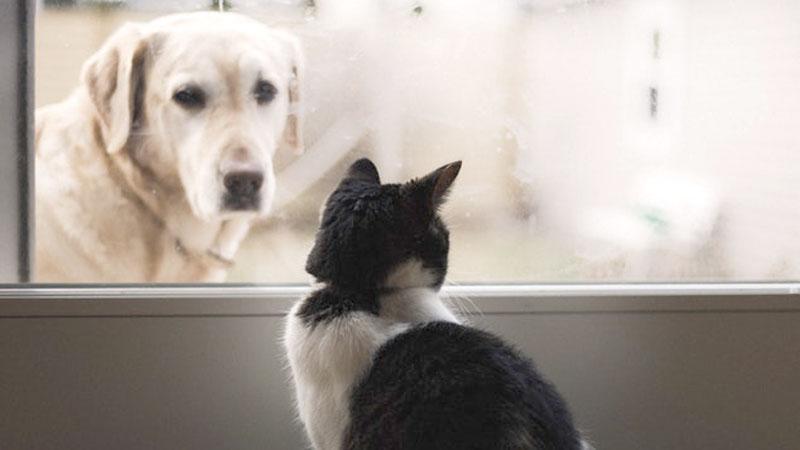5fbc2f342836 Σκύλο ή γάτα  Τι προτιμούν οι Έλληνες