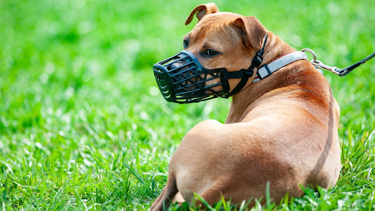 Σκύλος καιφίμωτρο: Ασφάλεια ήπροκατάληψη;