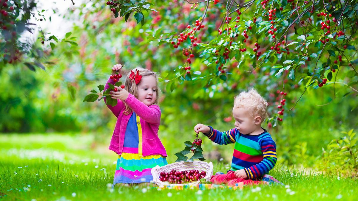 Αυτό το φρούτο προλαμβάνει καρδιαγγειακές παθήσεις και διαβήτη