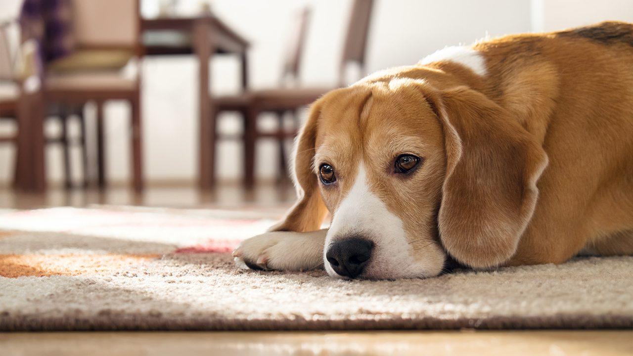 Μένουμε σπίτι: Έξι δραστηριότητες για να περνάτε όμορφα με τον σκύλο σας
