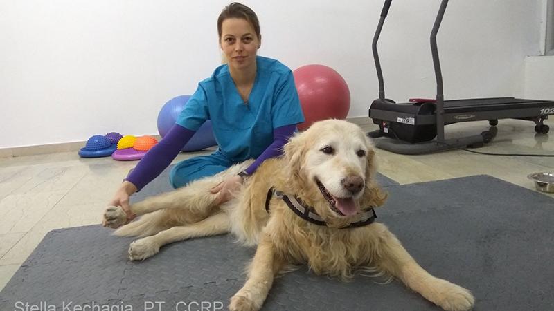 Οστεοαρθρίτιδα: Πώς μπορώ να βοηθήσω τον σκύλο μου;