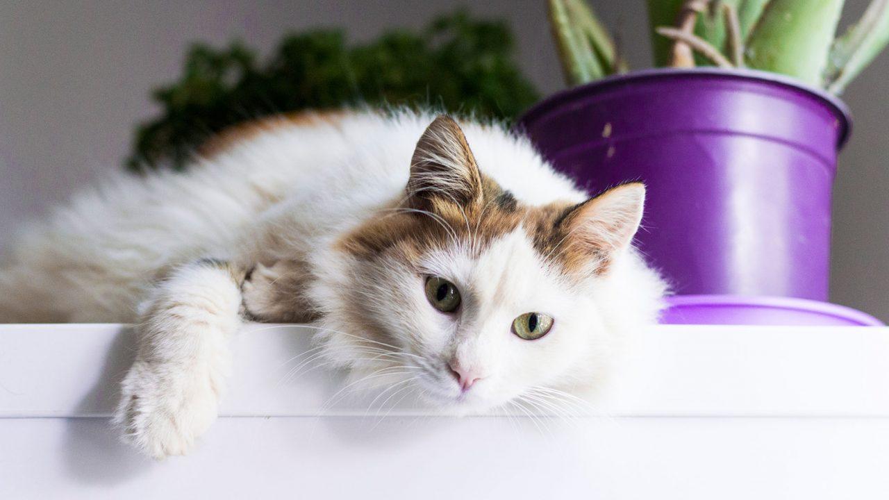 Τοξοπλάσμωση: Τελικά κολλάμε από τη γάτα;