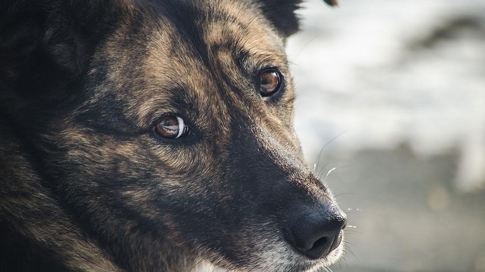 Ακόμη και μια ξυλιά αρκεί για να πάψει ο σκύλος να σας εμπιστεύεται