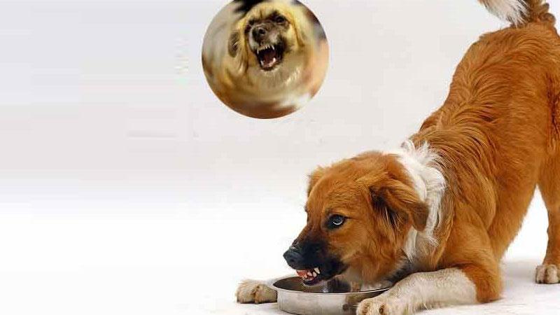 Πέντε λόγοι που γρυλίζει ο σκύλος