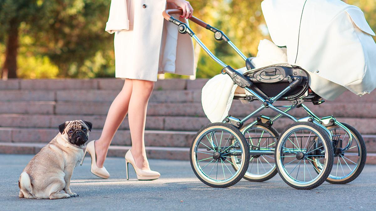 Βόλτα με τον σκύλο και το μωρό στο καρότσι. Γίνεται;