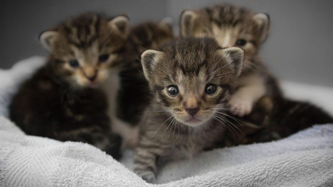 Πώς μπορούμε να βοηθήσουμε ένα εγκαταλελειμμένο νεογέννητο γατάκι