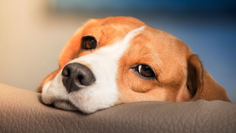 Πέντε λάθος συμπεριφορές που πληγώνουν τον σκύλο