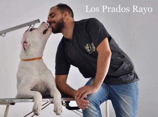 191118143228 doggo argentino2