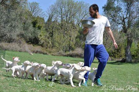 191118143229 doggo argentino5