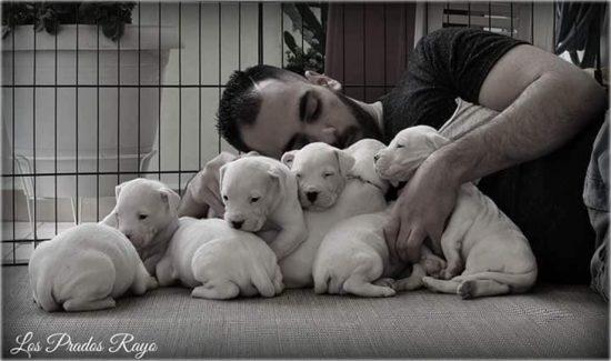191118143328 doggo argentino8