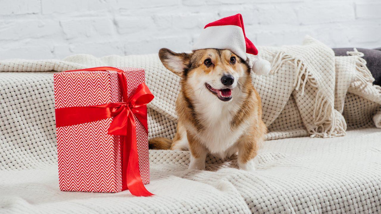 Αυτές τις γιορτές σκέφτομαι να κάνω «δώρο» έναν σκύλο – Είναι καλή ιδέα;