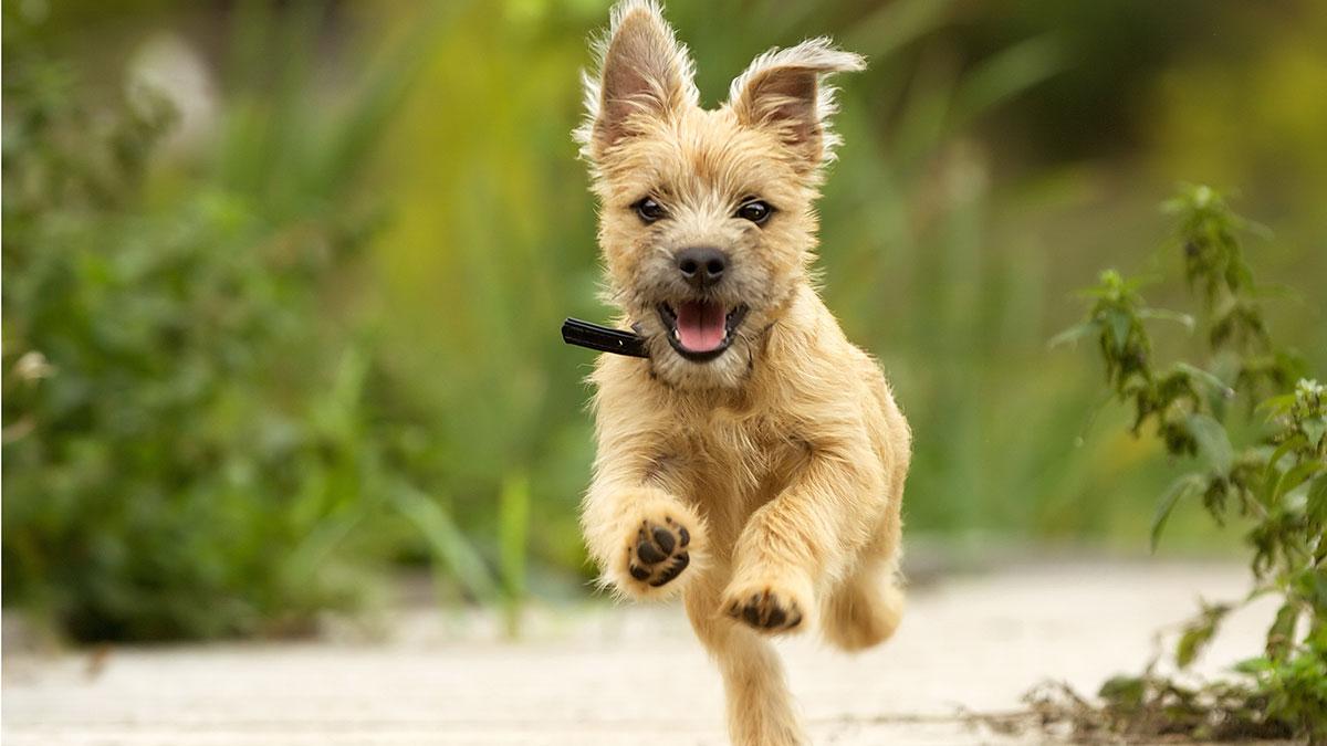Αφήστε τον σκύλο να μυρίσει τα πάντα γιατί «βλέπει» με τη μύτη του