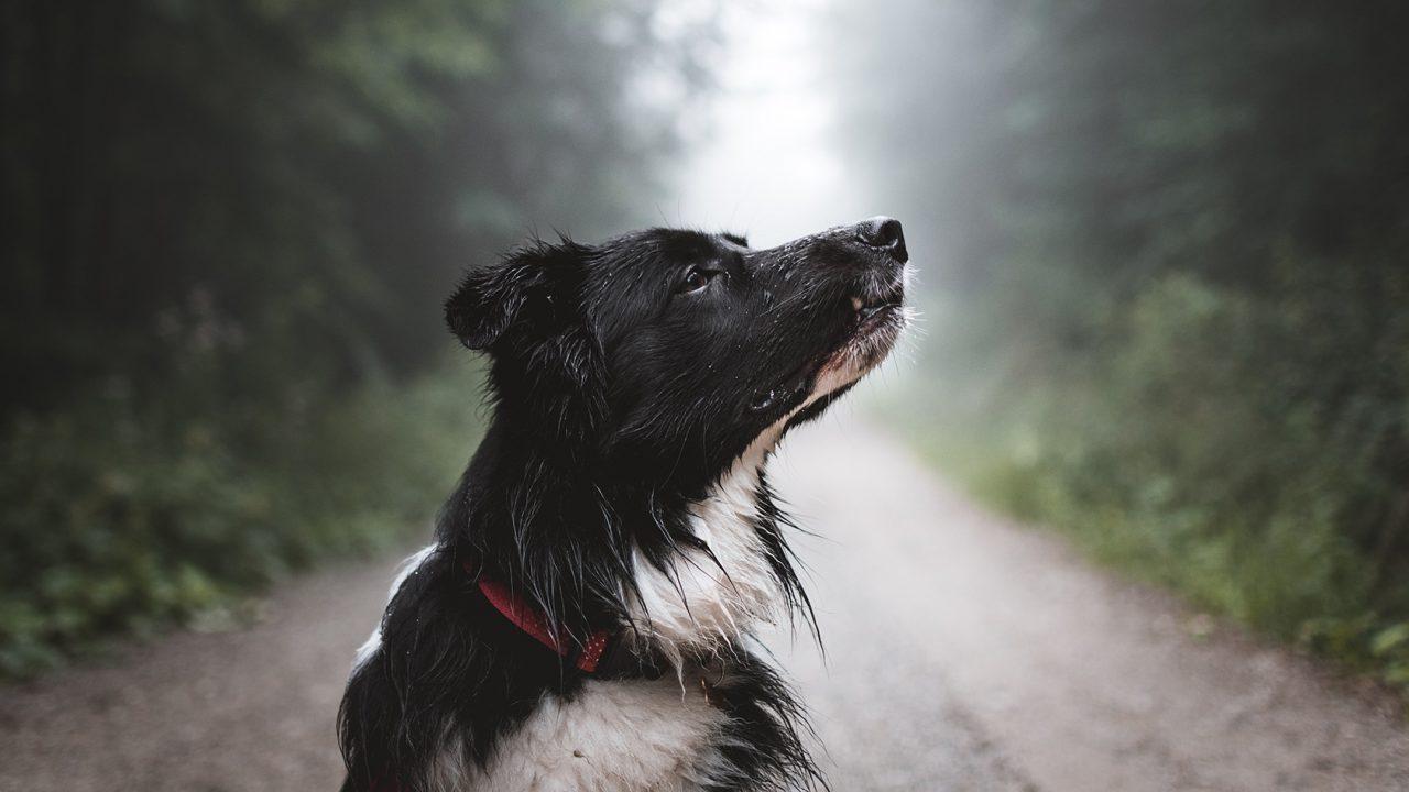 Ανακαλύψτε τις πιο δυνατές αισθήσεις του σκύλου