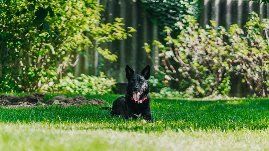 Θέλετε σκύλο; Απαντήστε αυτές τις δέκα ερωτήσεις – Δείτε αν είστε έτοιμοι