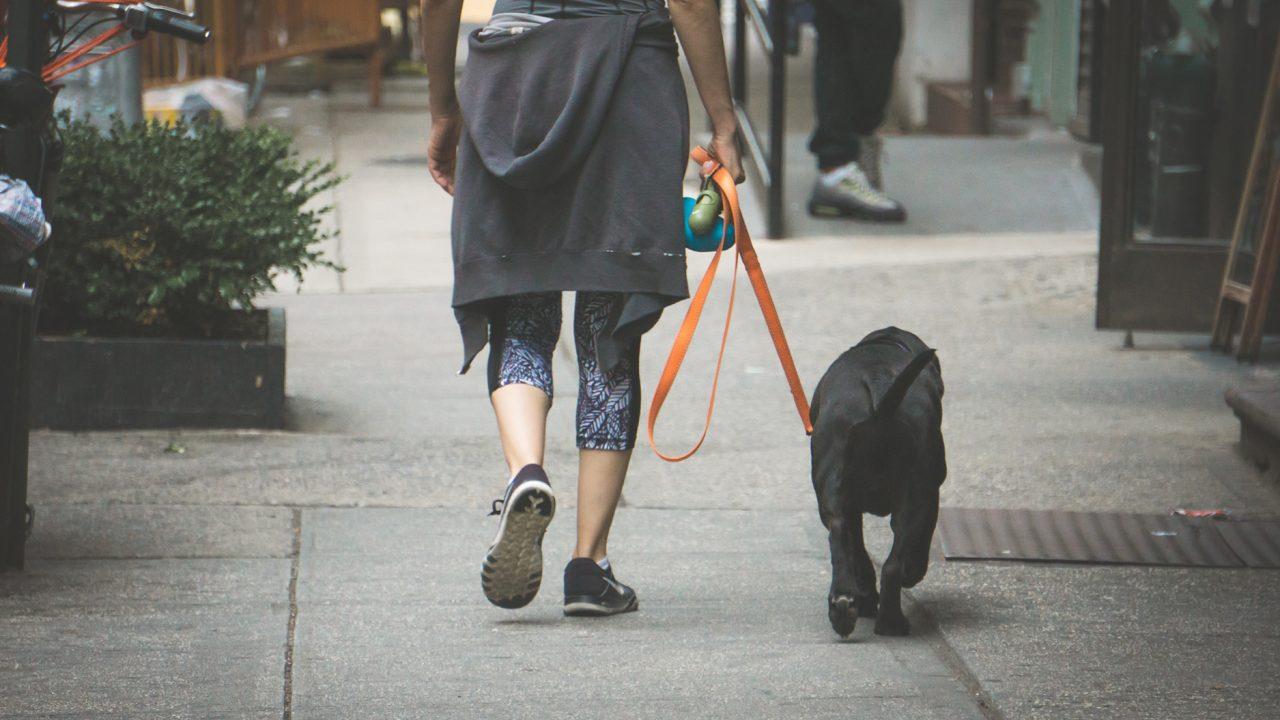 Κορωνοϊός: Τι να προσέχουμε στη βόλτα του σκύλου και στη φροντίδα των αδέσποτων