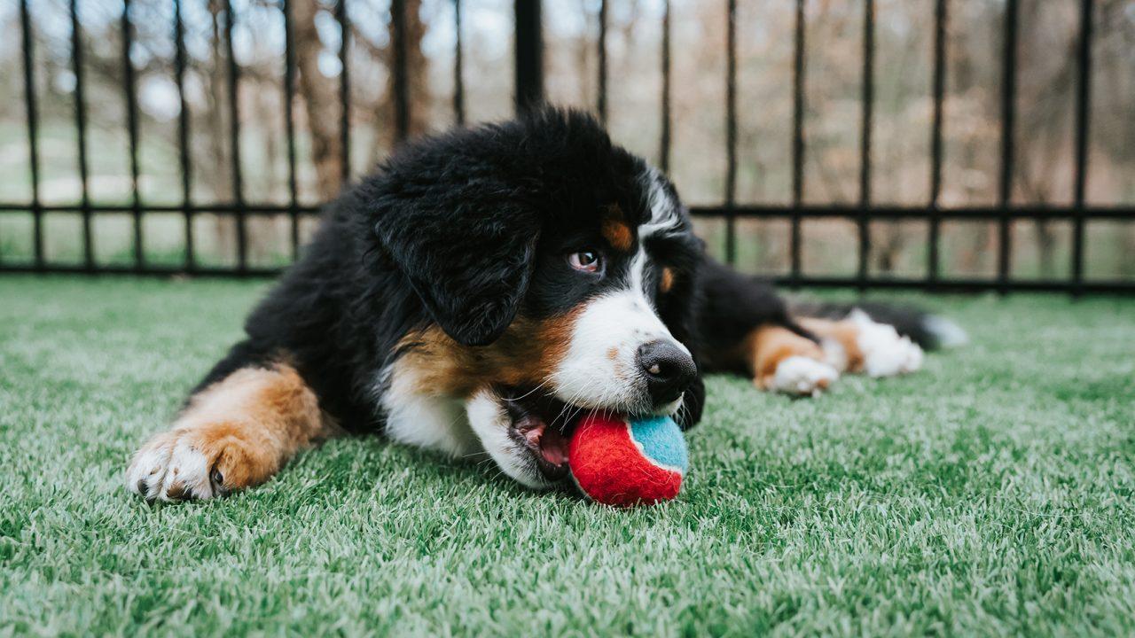 Παιχνίδι: Γιατί ο σκύλος «κολλάει» με το μπαλάκι και δεν το αφήνει από το στόμα του
