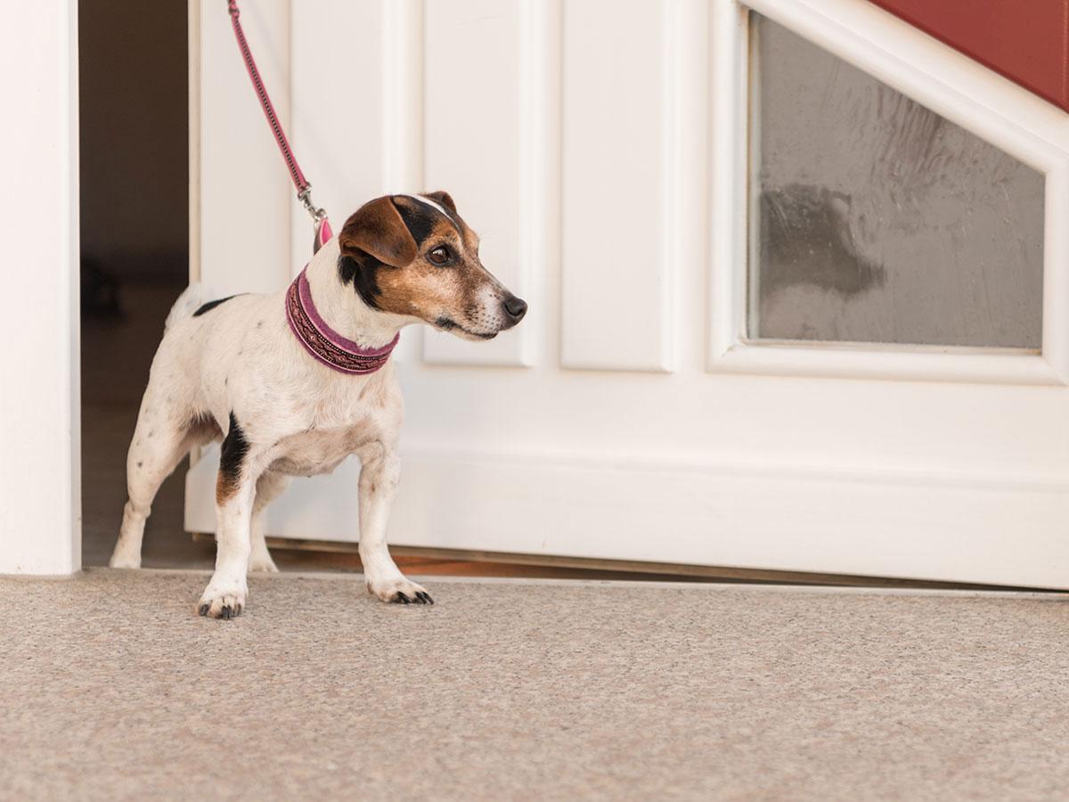 Σκύλος: Μήπως άθελά σας ενισχύετε μία ανεπιθύμητη συμπεριφορά;