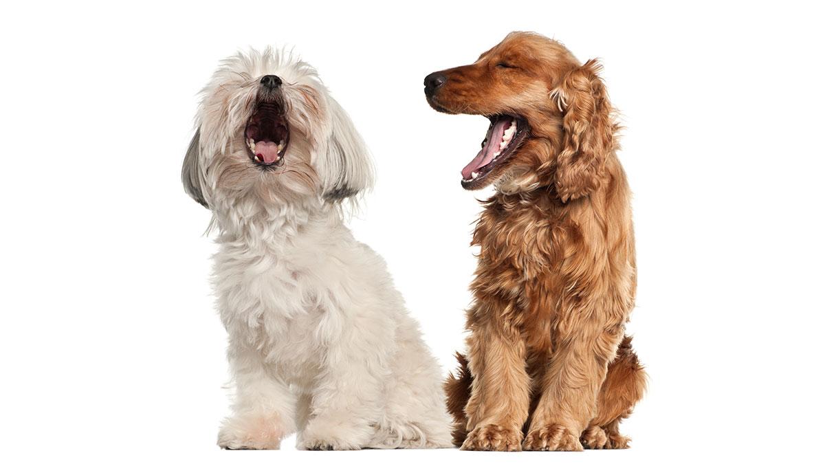 Γαβγίζει ο σκύλος σε ώρες κοινής ησυχίας; Ετοιμαστείτε να πληρώσετε πρόστιμο