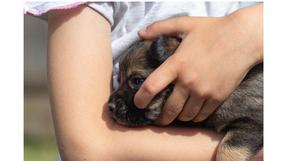 Εθελοντισμός: Αν αγαπάτε τα ζώα, τότε μπορείτε να τα βοηθήσετε με αυτό τον τρόπο