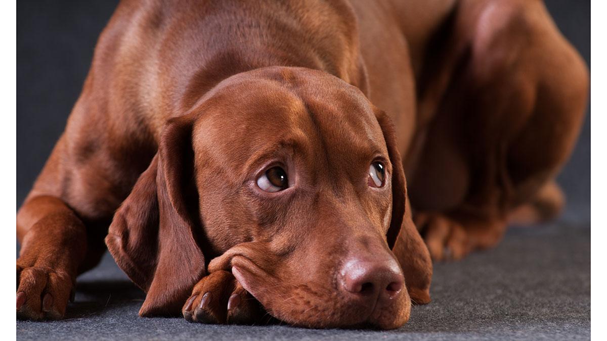 Εκπαίδευση: Η λάθος συμπεριφορά που δεν βοηθά τον σκύλο να μάθει, αλλά να φοβηθεί