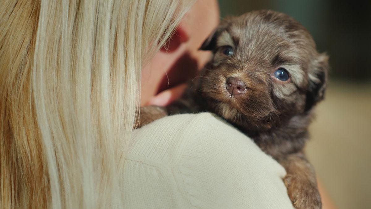 Φοβίες: Σε ποια ηλικία είναι πιο ευάλωτος ο σκύλος