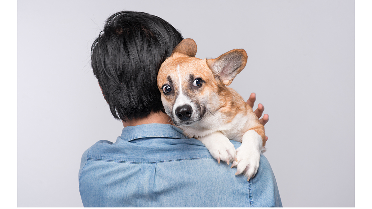 Σκύλος: 11 λόγοι που τρέμει – Πότε να ζητήσετε βοήθεια