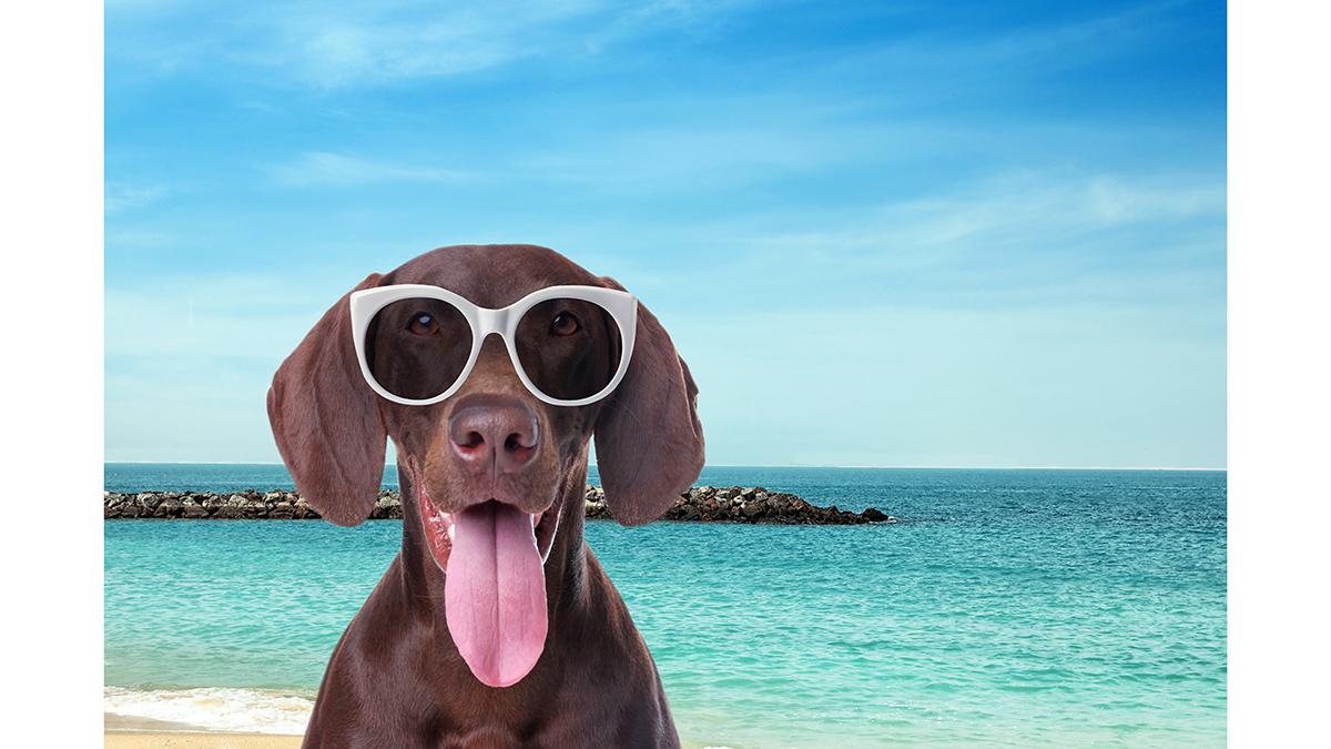 Ηλιακό έγκαυμα: Ποια σκυλιά κινδυνεύουν – Πώς να τα προστατεύσετε