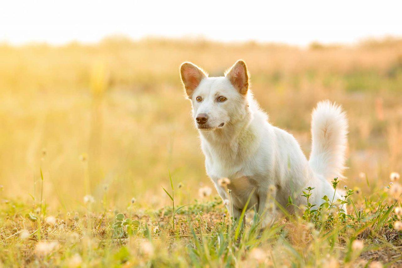 Σκύλοι: Τέσσερις λόγοι που… στριφογυρίζουν πριν κάνουν την ανάγκη τους