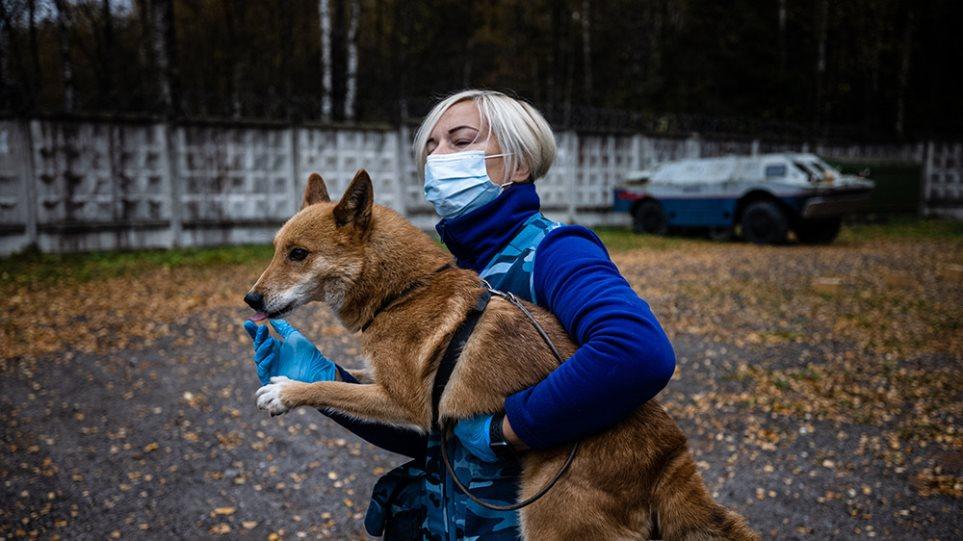 Σκύλοι εκπαιδεύονται για να ανιχνεύουν τον κορωνοϊό – Δείτε φωτογραφίες