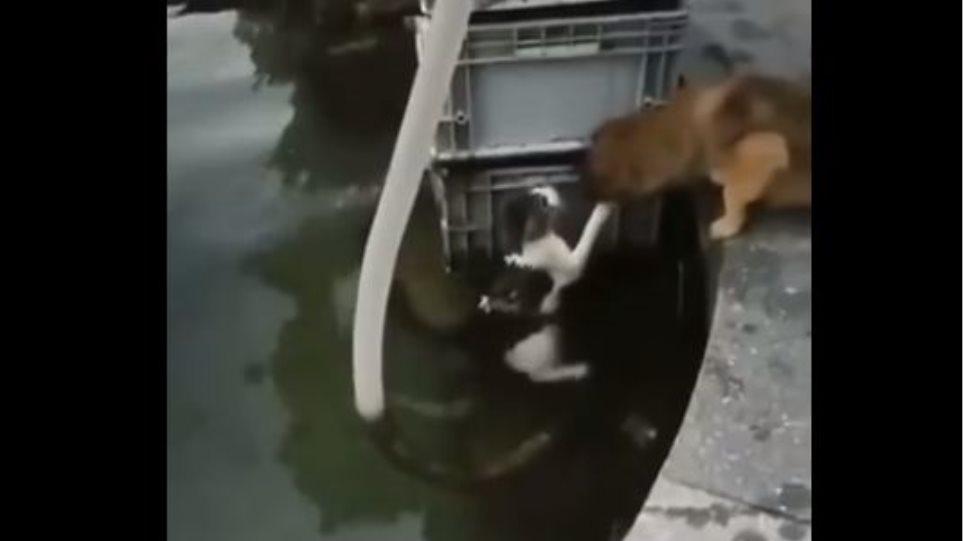 Τετράποδος ήρωας: Σκύλος βουτά στο νερό και σώζει γάτα! – Δείτε βίντεο