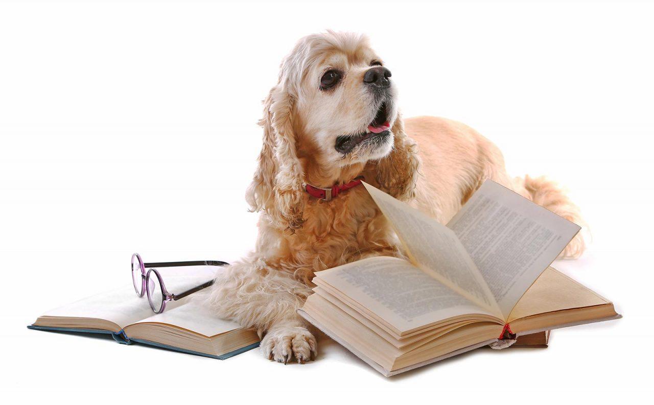 Ευφυΐα: Υπάρχουν έξυπνες ράτσες σκύλων; Ενημερωθείτε
