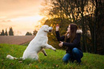 Για να μάθει ο σκύλος πρέπει να καταλάβει ποιος έχει το πάνω χέρι – Σωστά;
