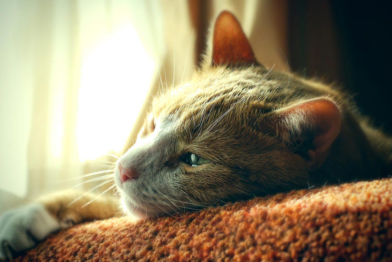 Η σοβαρή νόσος που απειλεί και τις γάτες – Ο ρόλος της διατροφής