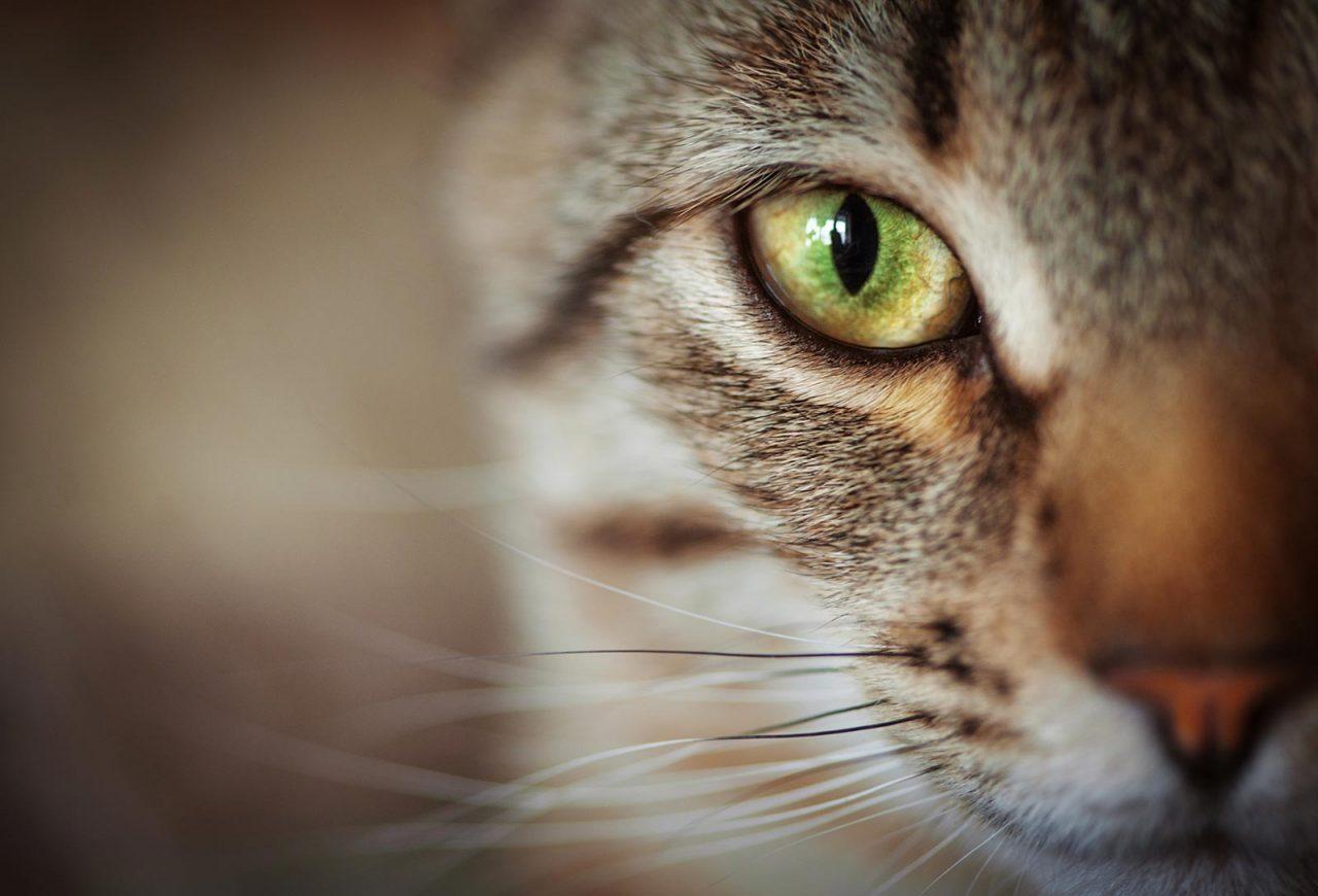 Γάτα: Πότε δυσκολεύεται ή αρνείται να φάει – Η σωστή αντιμετώπιση