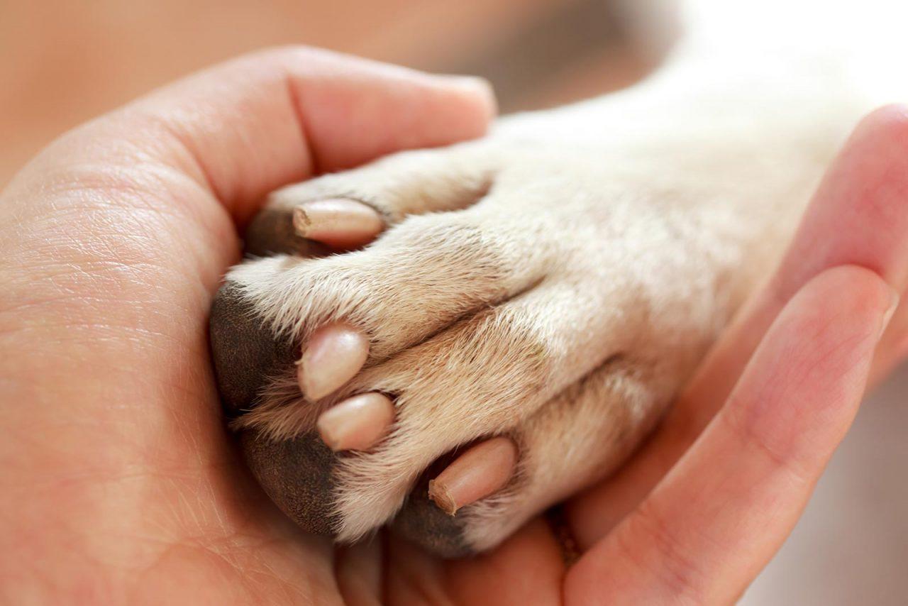 Ορέστεια: H τραυματισμένη σκυλίτσα που ξεγέλασε τον θάνατο ψάχνει σπίτι