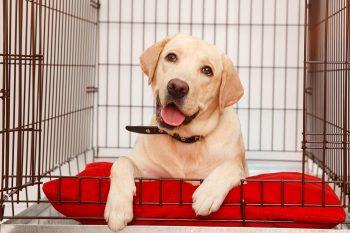 Crate ή αλλιώς κλουβί σκύλου: Τα «ναι» και τα «όχι» της ορθής χρήσης του