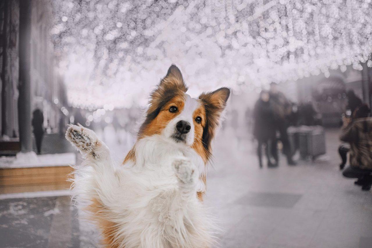 Ο σκύλος καβαλάει έναν άλλο σκύλο και άλλες 5 κινήσεις που κάτι «λένε»: Πώς ερμηνεύονται