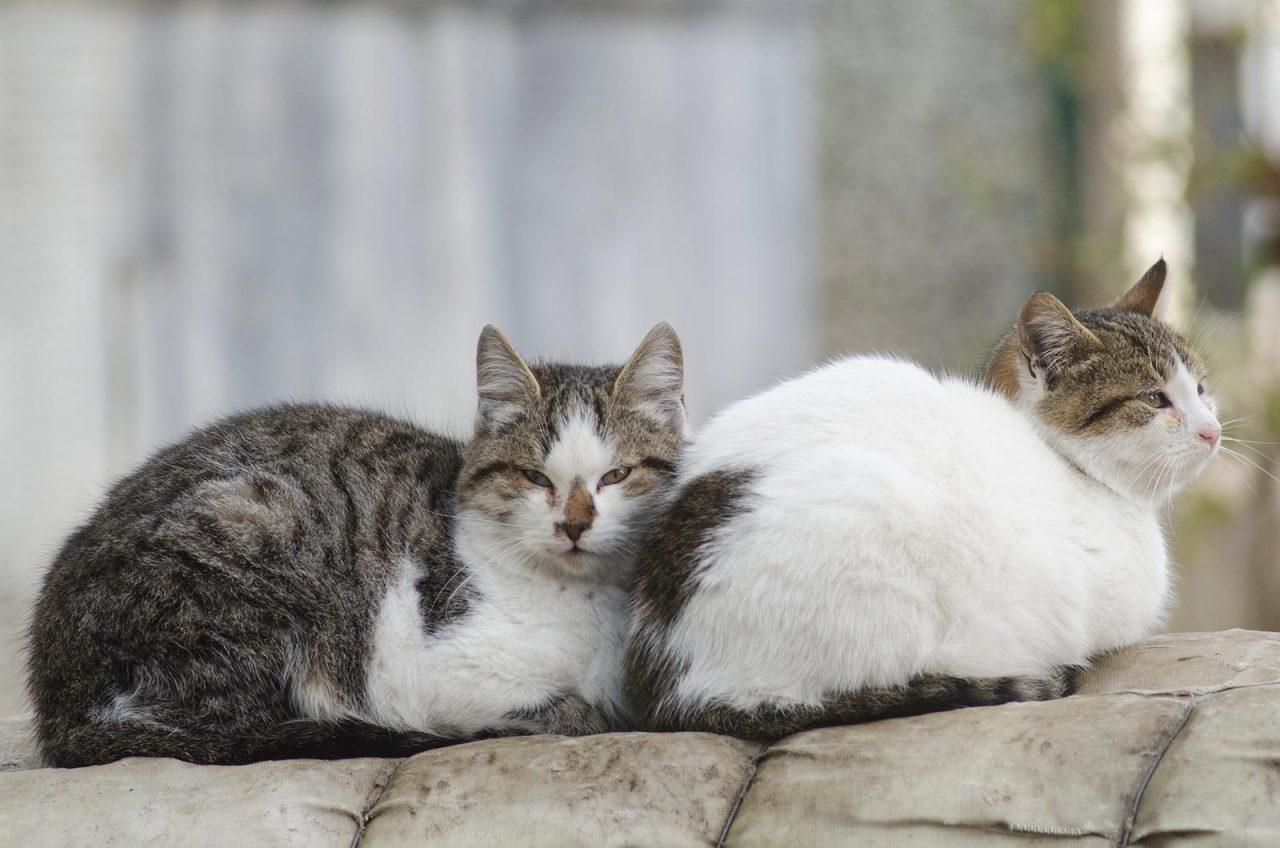 Αδέσποτες γατούλες: Το φαγητό που τις προστατεύει και δεν κοστίζει – Ενημερωθείτε