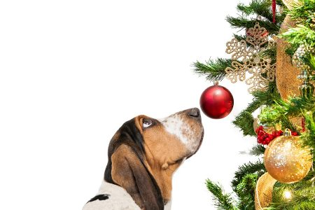 Χριστουγεννιάτικο δέντρο: Πως θα το «σώσουμε» από τον σκύλο!