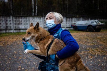 ΗΠΑ: Μόνο οι εκπαιδευμένοι σκύλοι «ζώα βοήθειας» στις αεροπορικές πτήσεις