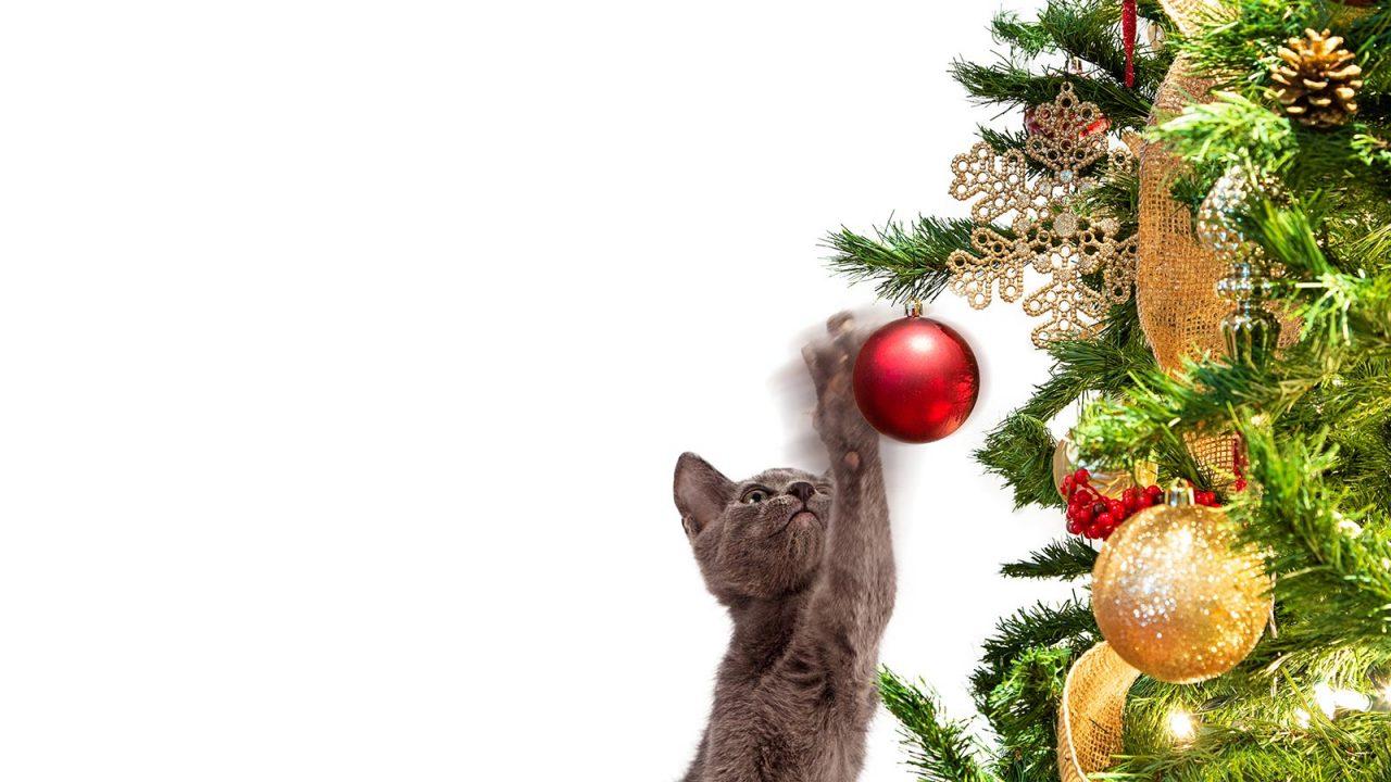 Γάτα: Πώς θα παραμείνει το χριστουγεννιάτικο δέντρο όρθιο!